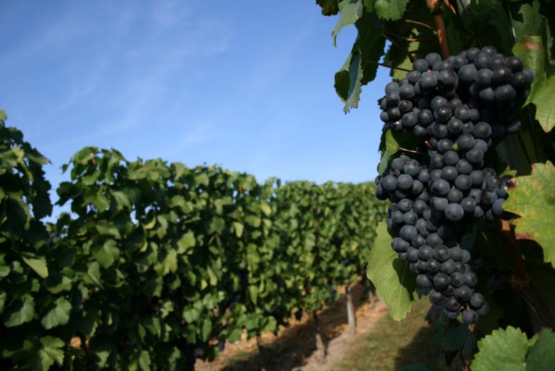 Weinbauverband Württemberg WVW