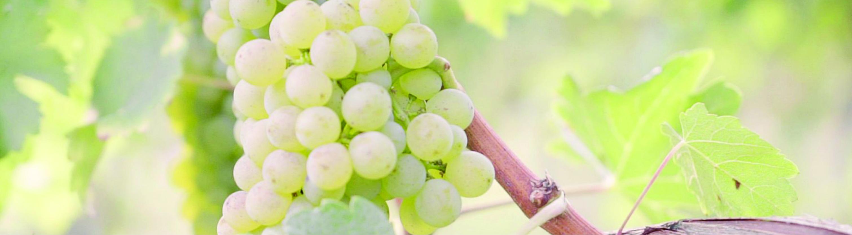 Weingut Politschek